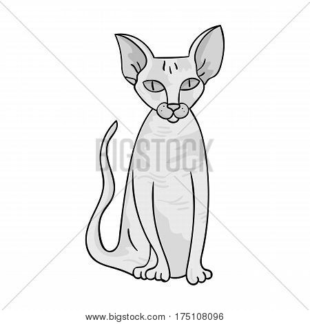 Peterbald icon in monochrome design isolated on white background. Cat breeds symbol stock vector illustration.