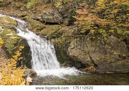 Cascade flowing between autumn teees in Minakami, Gumna