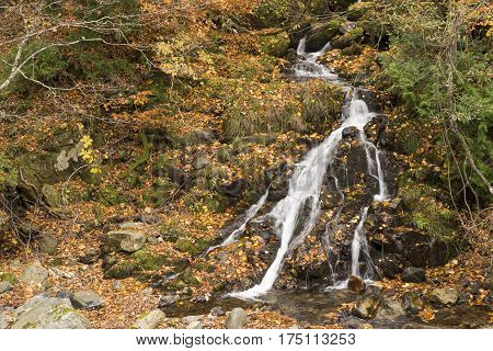 Thin brook flowing through fallen leaves in Minakami, Gumna