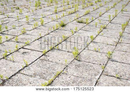 Old Pavement Grass