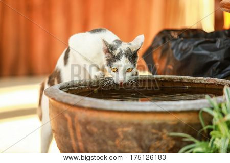 The cat is drinking, Thirsty cat
