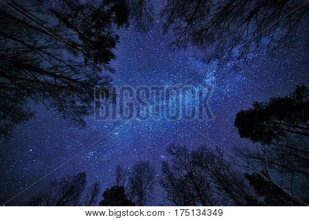 Deep blue night sky with the Milky Way over the forest and trees surrounding the scene.