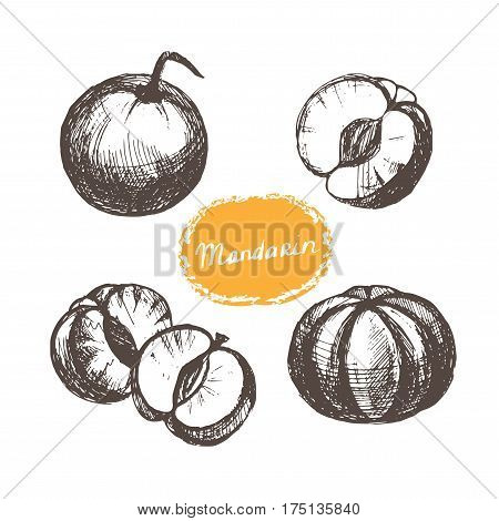 Set mandarins whole and peeled. Hand drawn illustration on white background. Vector