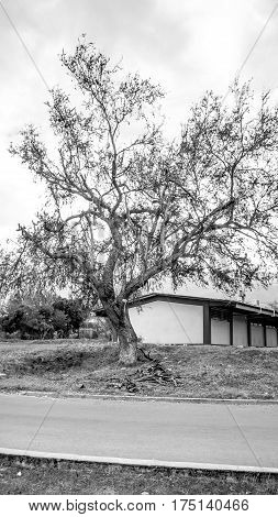 Beautiful black and white photo of school building with a dry tree on one side.