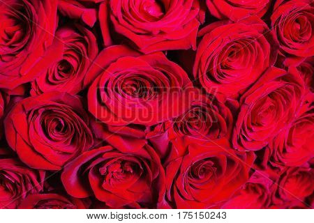 Big beautiful bouquet of red roses present. Texture colors. A gift for a wedding birthday Valentine's Day present. Present rose concept