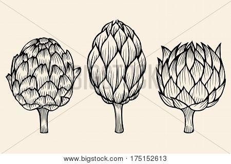 vector set of engraving illustration vegetables artichoke on baige background