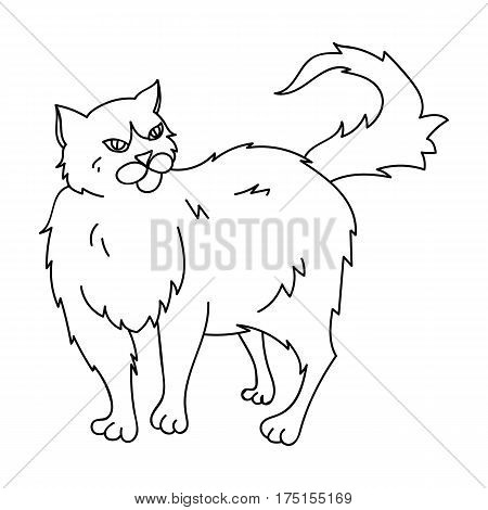 Persian icon in outline design isolated on white background. Cat breeds symbol stock vector illustration.