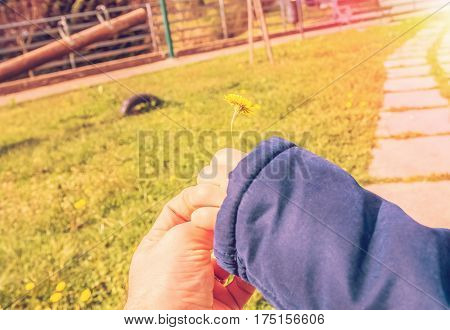 Young Man Father Give Flower To His Adorable Little Boy Child Son On Flower Meadow, On Sunset Rays L