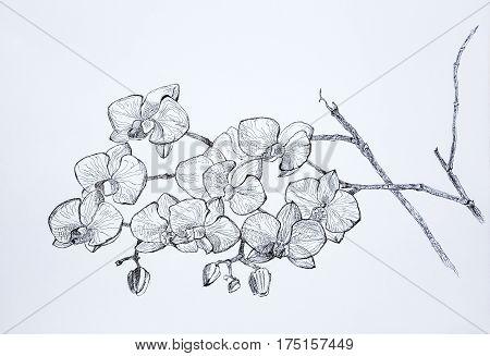 Sketch Graphics Gel Pen Orchids