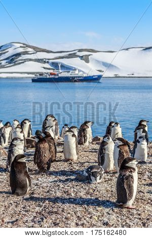 Chinstrap Penguins Crowd Standing On The Rocks And Touristic Cruise Ship In The Background At South