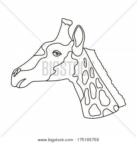 Giraffe icon in outline design isolated on white background. Realistic animals symbol stock vector illustration.