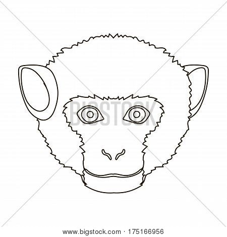 Monkey icon in outline design isolated on white background. Realistic animals symbol stock vector illustration.