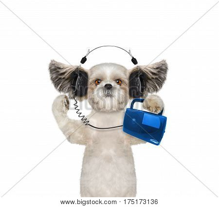 Cute dog with headphone isolated on white background