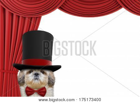Cute dog hiding behind the curtain isolated on white