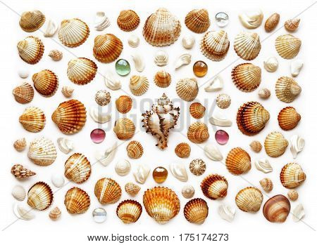 Pattern of seashells and glass beads. Isolated on white. Flat lay top view