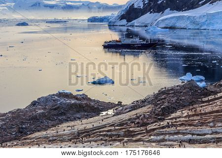 Antarctic Cruise Ship Among Icebergs And Gentoo Penguins Gathered On The Rocky Shore Of Neco Bay, An