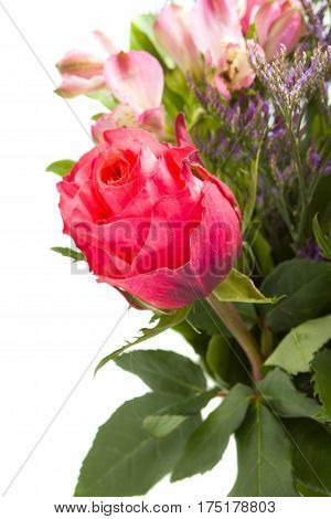 beautiful rose flowers isolated on white background