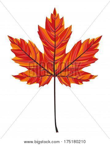 Maple Leaf vecto illustration background, eps 10