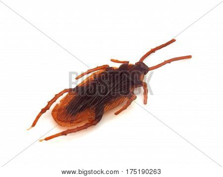 One cockroach on a white background. One cockroach on a white background.