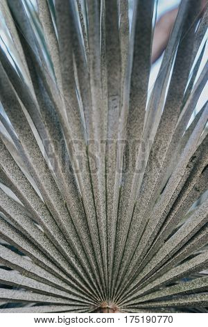 Closeup photo of palm tree leave. Vintage looking tropical palm tree leaf texture.