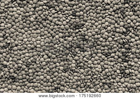 dried grains or seeds of lentil for a background and texture closeup of speckled color of beige tone