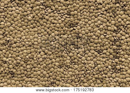 dried grains or seeds of lentil for a background and texture closeup of speckled color of khaki tone
