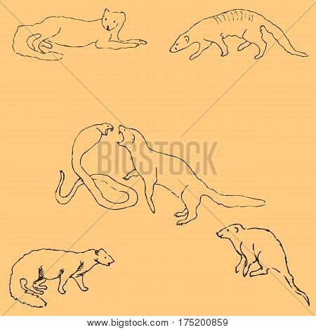 Mongoose. Sketch by hand. Pencil drawing by hand. Vector image. The image is thin lines. Vintage colors