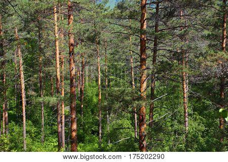 Forest landscape in taiga, Siberia, Russia