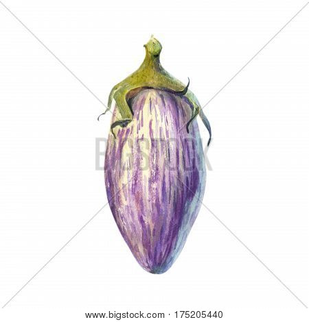 Bicolored striped eggplant isolated on white watercolor illustration