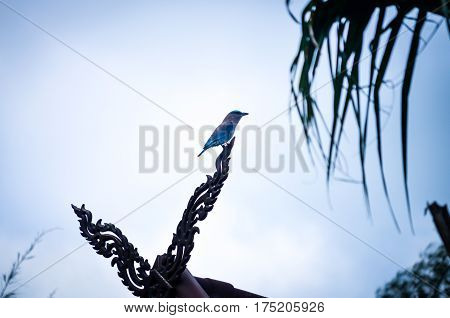 blue and brown swallow bird in tropics