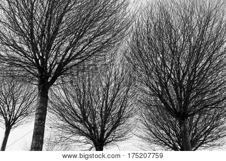 Black And White Silhouettes Of Trees