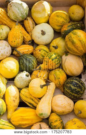 colored pumpkins on a pile in a wooden box
