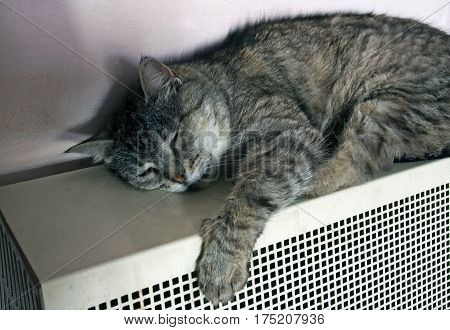 Striped cat heated on a gas battery