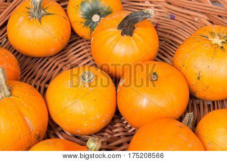orange pumpkins on a pile in a wooden basket