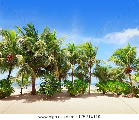 Tropical beach with Coconut palm trees along coastline .  Mahe, Seychelles.