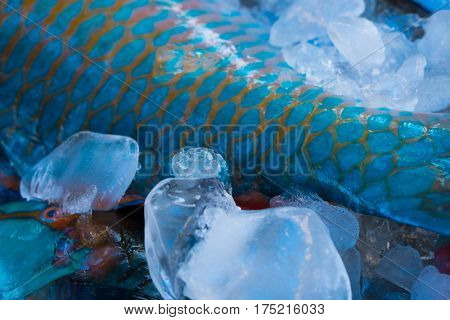 Closeup of turquoise parrot fish tail preserved on ice at fishmarket