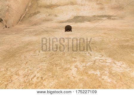 Sleeping Bat In An Underground Tunnel.