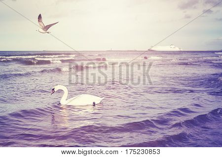 Color Toned Swan And Ferryboat In Distance, Travel Concept.
