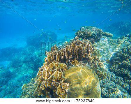 Undersea landscape with coral reef diversity. Oceanic wildlife in exotic island seashore. Tropical sea lagoon with huge corals. Beautiful coral reef photo. Snorkeling scene of exotic island seashore