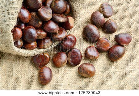 Castanea sativa or sweet chestnut in sack bag on sack background.