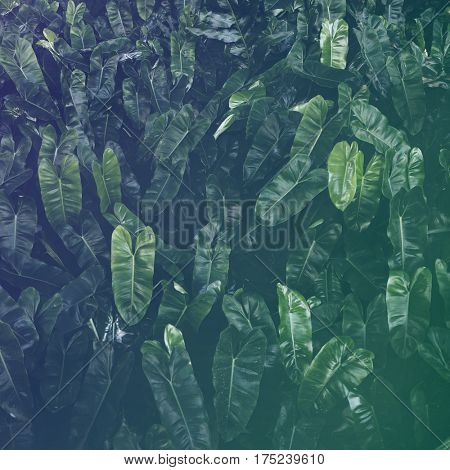 Leaf Greenery Foliage Nature Freshness
