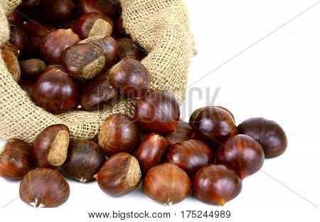 Castanea sativa or sweet chestnut in sack bag on white background.