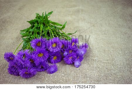 Wild, flowers, chamomile, burlap, gift, bouquet, weighing., The, diclaration, love., card.