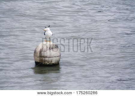 Seagull resting on a buoy, they can be found on any beach in the world