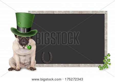 sweet smart pug puppy dog with st. patrick's day hat and pipe sitting next to blank blackboard sign with shamrock and horseshoe