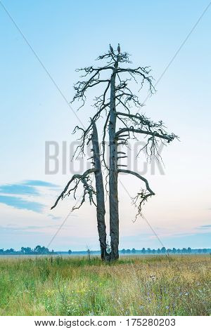 Rural Landscape With Storks Sitting On Old Withered Tree