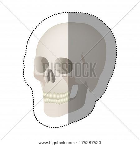 white skeleton of the human skull icon, vector ilustraction design