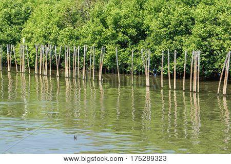 Mangrove Forest At Bang Pu, Samut Prakan, Thailand