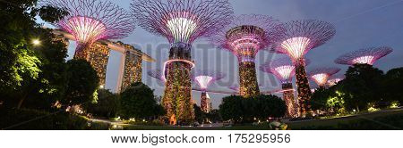 2017 January: Panoramic image of the Supertree Grove - vertical garden structures providing renewable energy in Singapore's Gardens By The Bay at dusk / sunset.