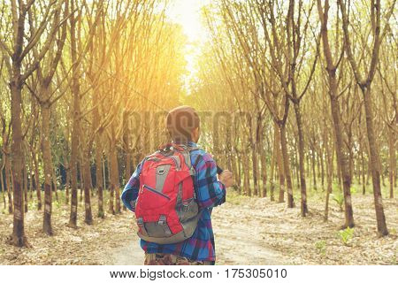 Back of traveler backpack walking in the forest  view.Or man Asian backpack with forest.12